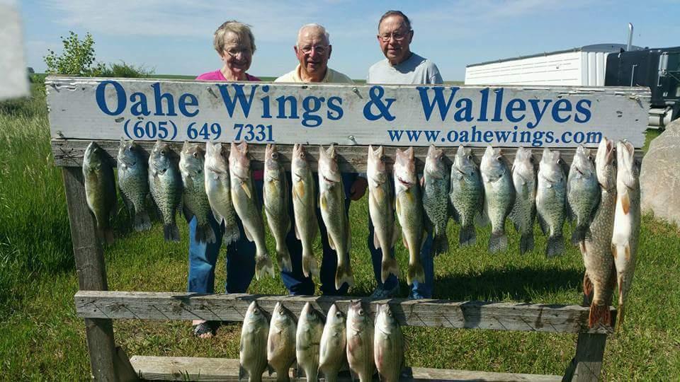 Walleye fishing oahe wings and walleyes
