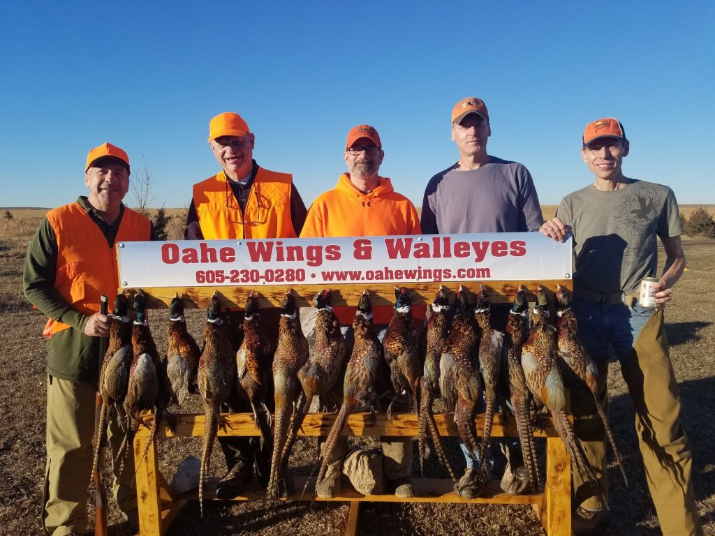 Oahe Wings & Walleyes: Pheasant Hunting in SD